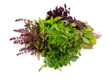 Collection of basil herb Royalty Free Stock Photos