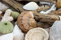 Collection of beach findings Stock Image