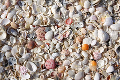 Collection of Beach Seashells Background Royalty Free Stock Images