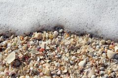 Collection of Beach Seashells Background Framed by Ocean Sea Foa Royalty Free Stock Photography