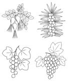 Collection. A beautiful branch of wild rose berries, currants, sea buckthorn, grapes. Graphic image. Useful tasty berries for vector illustration