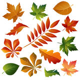 Collection beautiful colorful autumn leaves Stock Photos