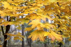 Collection of beautiful colorful autumn Leaves Stock Photography