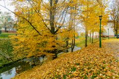Collection of Beautiful Colorful Autumn Leaves green, yellow, orange, red Stock Photos