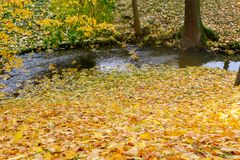 Collection of Beautiful Colorful Autumn Leaves green, yellow, orange, red Stock Photo