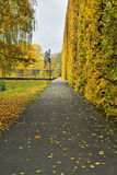 Collection of Beautiful Colorful Autumn Leaves Stock Photos