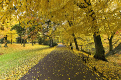 Collection of Beautiful Colorful Autumn Leaves Royalty Free Stock Photo