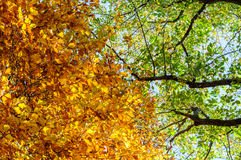 Collection of Beautiful Colorful Autumn Leaves / green, yellow,. Orange, red Royalty Free Stock Images
