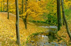 Collection of Beautiful Colorful Autumn Leaves green, yellow, orange, red Stock Photography