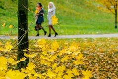Collection of Beautiful Colorful Autumn Leaves green, yellow, orange, red Stock Image