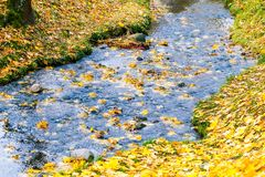 Collection of Beautiful Colorful Autumn Leaves green, yellow, orange, red Stock Images