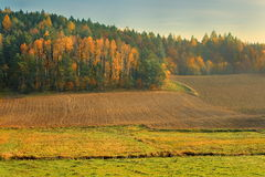 Collection of Beautiful Colorful Autumn Leaves / green, yellow, orange, red Stock Images