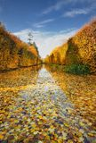 Collection of Beautiful Colorful Autumn Leaves / green, yellow, orange, red Royalty Free Stock Images