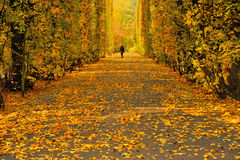 Collection of Beautiful Colorful Autumn Leaves / green, yellow, orange, red Stock Photography