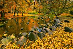 Collection of Beautiful Colorful Autumn Leaves / green, yellow, orange, red Stock Photos