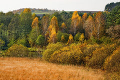 Collection of Beautiful Colorful Autumn Leaves / green, yellow, orange, red Royalty Free Stock Photography
