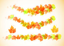 Collection beautiful colorful autumn leaves stock illustration