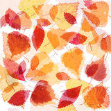 Collection beautiful colorful autumn leaves Royalty Free Stock Photography