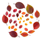 Collection beautiful colorful autumn leaves isolated on white background Royalty Free Stock Photos