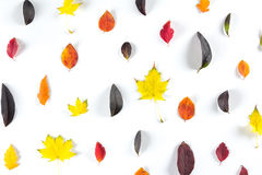 Collection of beautiful colorful autumn leaves isolated on white background Stock Photos