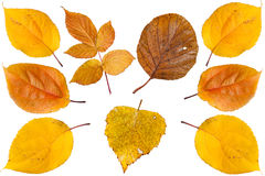 Collection beautiful colourful autumn leaves Stock Images