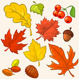 Collection beautiful colourful autumn leaves Royalty Free Stock Photography
