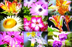 Collection of Beautiful Flowers Royalty Free Stock Photos