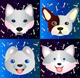 Collection of cute pets - dogs, close-up Royalty Free Stock Photo