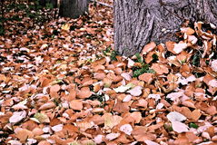 Collection beautiful leaves in autumn park. Autumn landscape Stock Photo