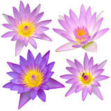 Collection of beautiful lotus flower isolated Royalty Free Stock Photos