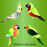 Collection of beautiful parrot birds. Collection of tropical parrots. Cartoon style - bright gradient sketches of birds Royalty Free Stock Image