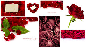Collection of Beautiful rose. Royalty Free Stock Photography