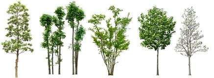 Collection Beautiful Trees Isolated on white background , Suitable for use in architectural design , Decoration work , Used with n