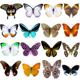 Collection of beautiful tropical butterflies Royalty Free Stock Image