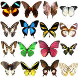 Collection of beautiful tropical butterflies Royalty Free Stock Photos