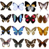 Collection of beautiful tropical butterflies Stock Photo