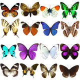 Collection of beautiful tropical butterflies Stock Photos