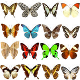 Collection of beautiful tropical butterflies Royalty Free Stock Photography