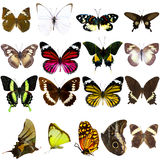 Collection of beautiful tropical butterflies Royalty Free Stock Photo
