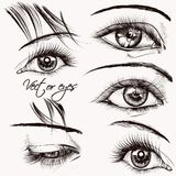 Collection of  beautiful vector hand drawn female eyes for desig Royalty Free Stock Photos