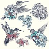 Beautiful vector hummingbirds with flowers Royalty Free Stock Photography