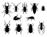 Collection of beetles. In black Royalty Free Stock Photography