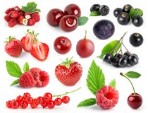 Collection of berries Stock Image