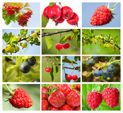 Collection of berry images Royalty Free Stock Photos