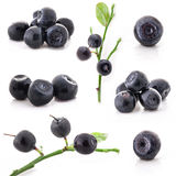 Collection of Bilberry Royalty Free Stock Photo