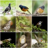 Collection of bird Stock Image