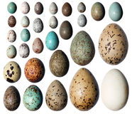 Collection of the bird's eggs. Royalty Free Stock Images