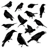 Collection of Bird Silhouettes Royalty Free Stock Photography