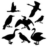 Collection of birds Stock Image