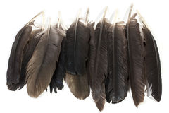 Collection of Birds Feathers in Varying Shades of Grey Royalty Free Stock Photography